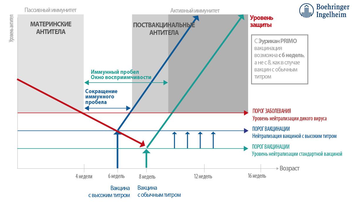 Схема ревакцинации